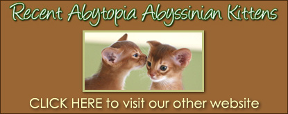 Recent Abyssinian Kittens
